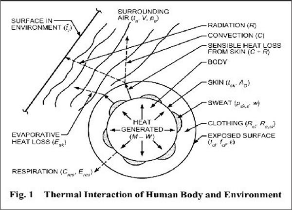 กลไกการถ่ายเทความร้อนบริเวณผิวหนัง (ASHRAE Handbook 2017 Fundamental, Chapter 9)