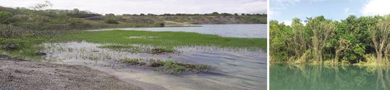 รูปที่ 16 พืชน้ำที่เจริญเติบโตในบ่อเหมือง อำเภอลี้ จังหวัดลำพูน หลังการบำบัด มีนกเป็ดน้ำอพยพมาอยู่อาศัย